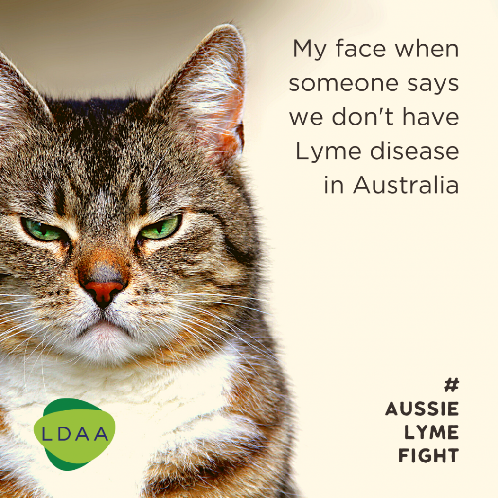 Angry cat face - Lyme Disease Association of Australia